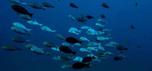 Biyadhoo-Dive-package-7night